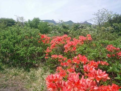 レンゲツツジと安達太良山