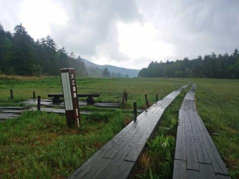 雨にぬれる大江湿原
