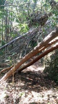 倒木がある山道