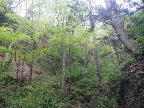 新緑がきれいな男体山