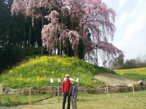 合戦場のしだれ桜の前で