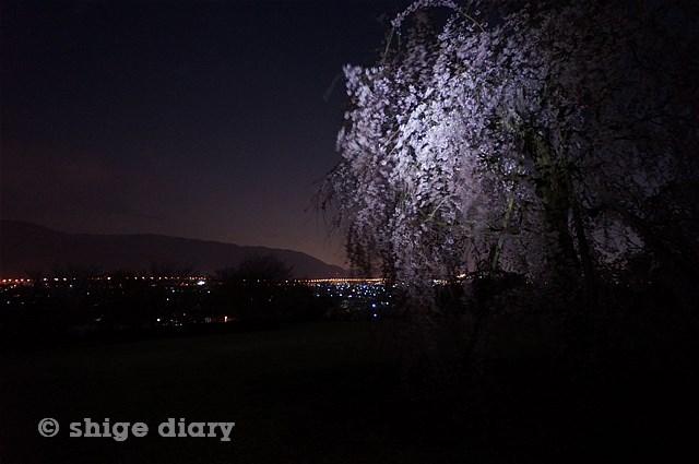 夜桜南足柄