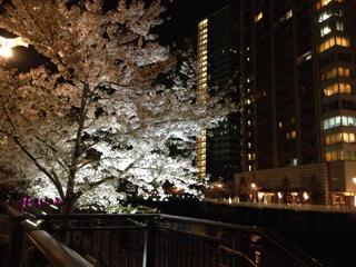 大崎~五反田の桜