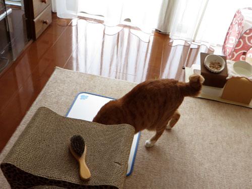 猫缶スルーして