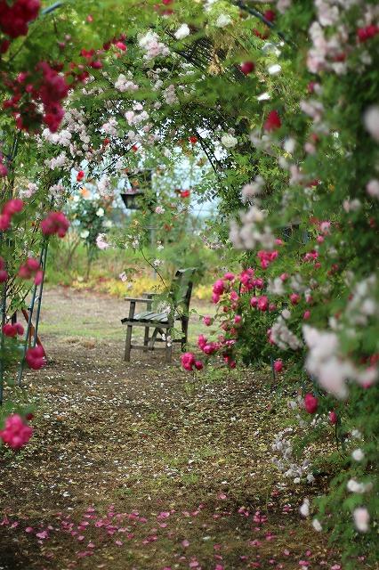 IMG_5535安曇野のバラのお宅