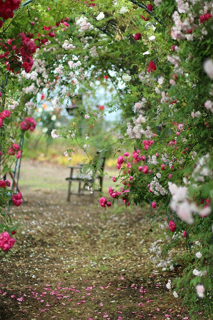 IMG_5537安曇野のバラのお宅