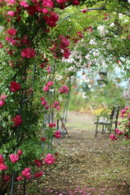 IMG_5540安曇野のバラのお宅