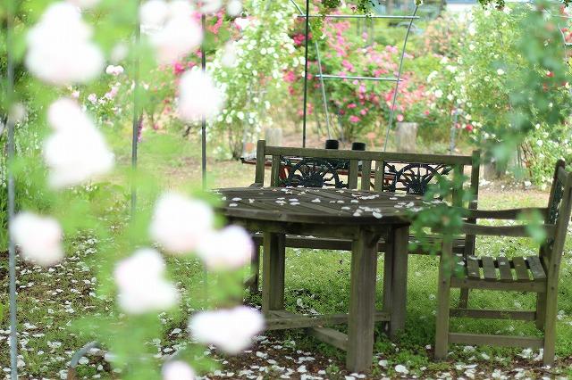 IMG_5541安曇野のバラのお宅