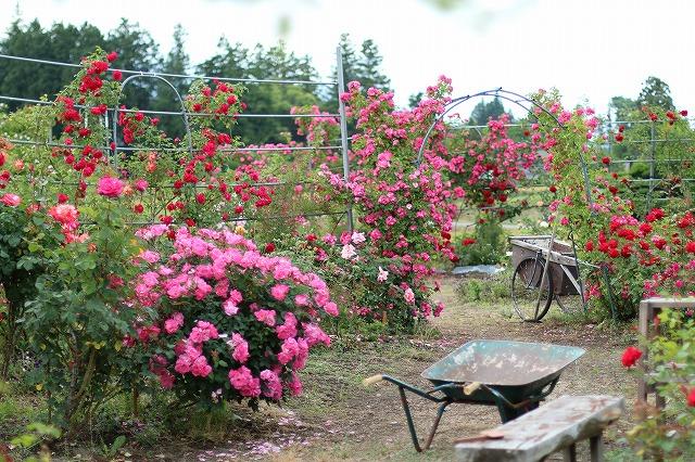 IMG_5548安曇野のバラのお宅
