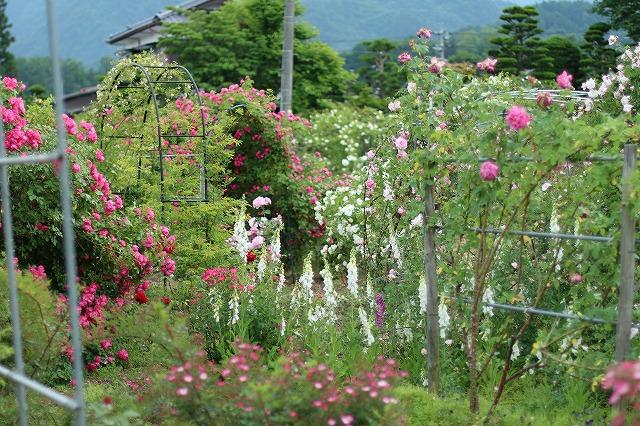IMG_5559安曇野のバラのお宅