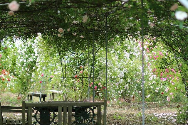 IMG_5576安曇野のバラのお宅