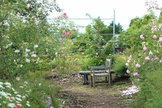 IMG_5584安曇野のバラのお宅