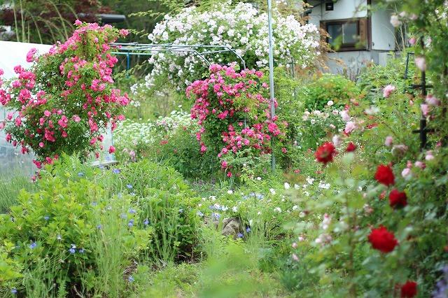 IMG_5588安曇野のバラのお宅
