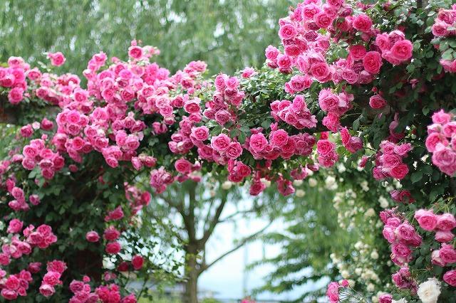 IMG_5471中野一本木公園