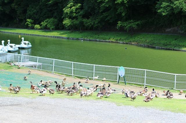 IMG_5696東京ドイツ村
