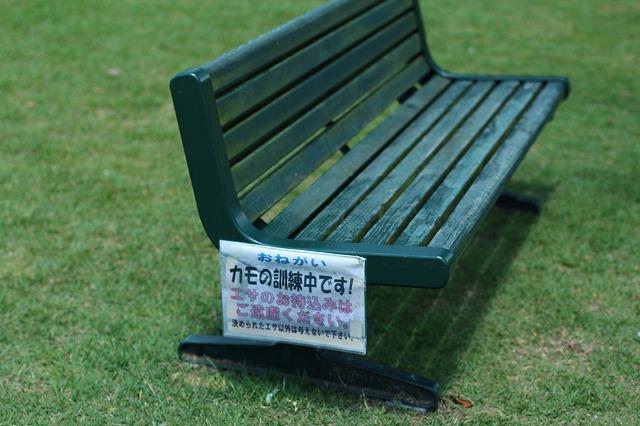 IMG_5704東京ドイツ村