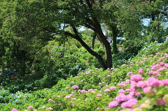 IMG_5736東京ドイツ村