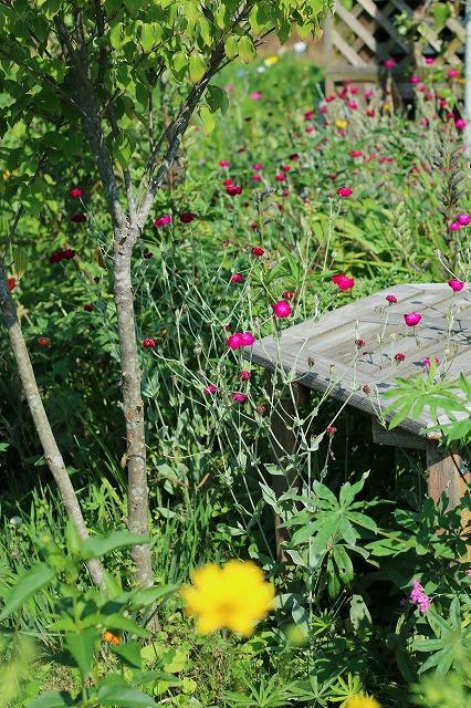 IMG_6204実家の庭