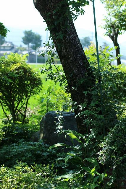 IMG_6208実家の庭
