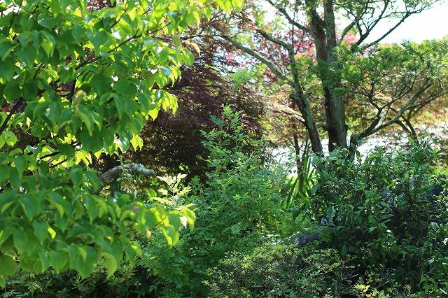 IMG_6210実家の庭