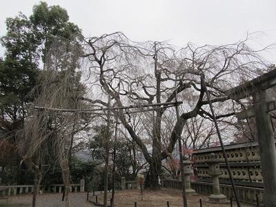 IMG_0119 大石神社