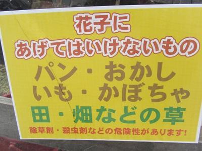 IMG_0132 大石神社