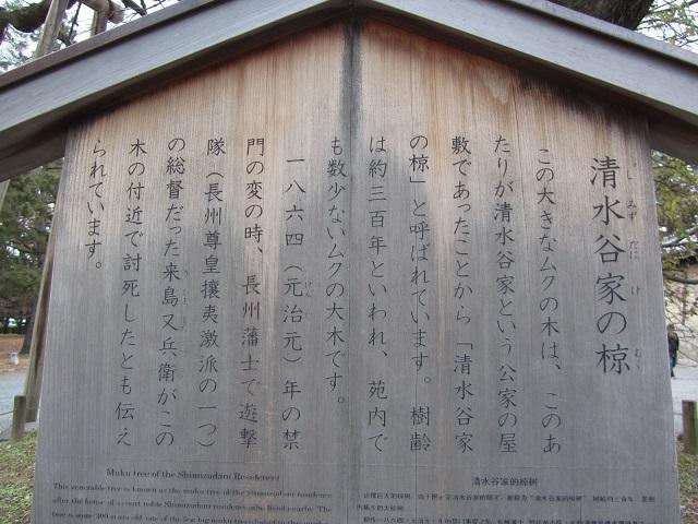 IMG_0037 kijima