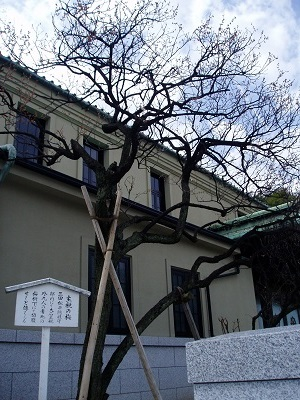 泉岳寺11 主税の梅B
