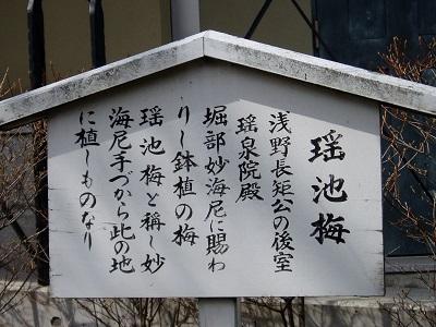 泉岳寺12 瑶池梅の看板B