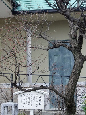 泉岳寺13 瑶池梅B
