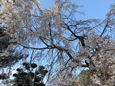IMG_0890 松陰神社
