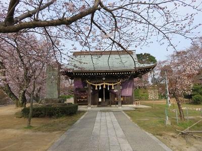IMG_1719 桜山