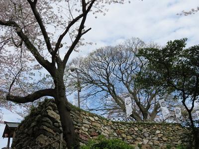 IMG_2855 浜松城