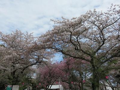 IMG_2852 浜松城