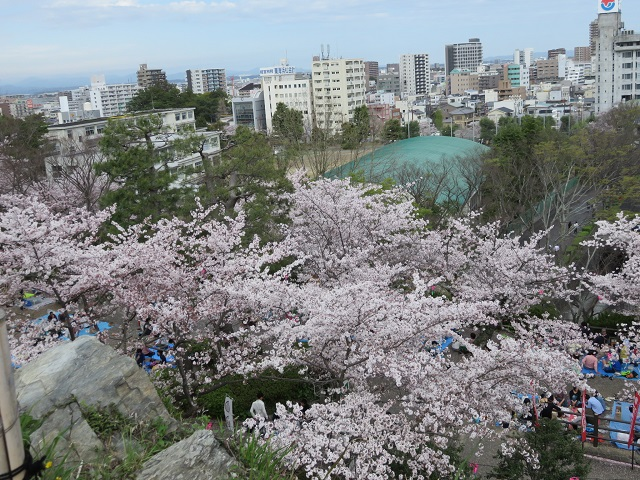 IMG_2876 浜松城