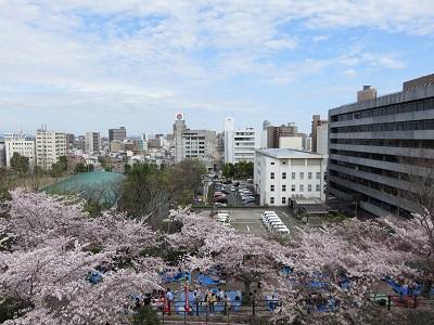 IMG_2878 浜松城