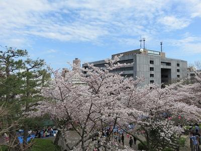 IMG_2900 浜松城