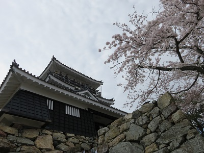 IMG_2880 浜松城