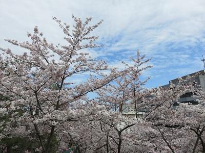 IMG_2904 浜松城