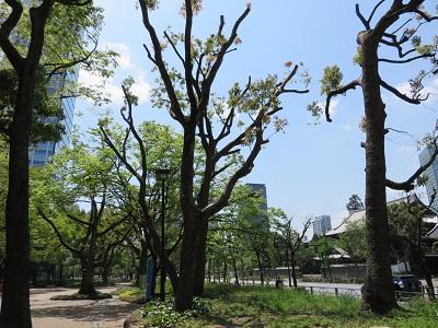 IMG_4048 松原