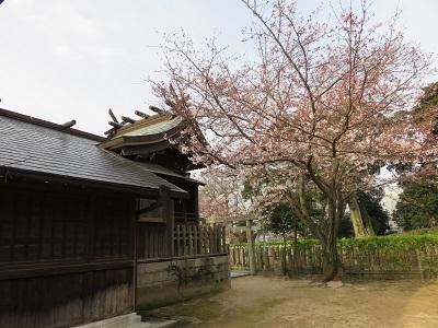 IMG_1734 桜山神社