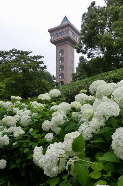 グリーンタワー相模原とアナベル