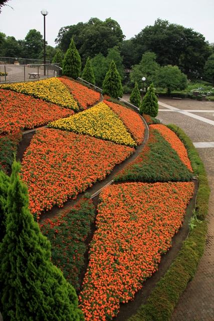 マリーゴールドの色鮮やかな夏花壇