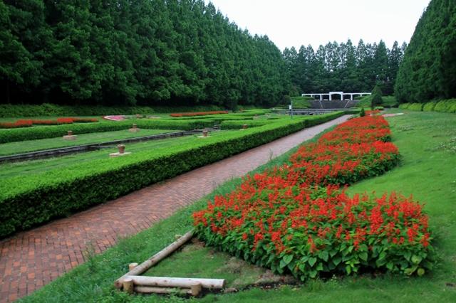 サルビアの夏花壇