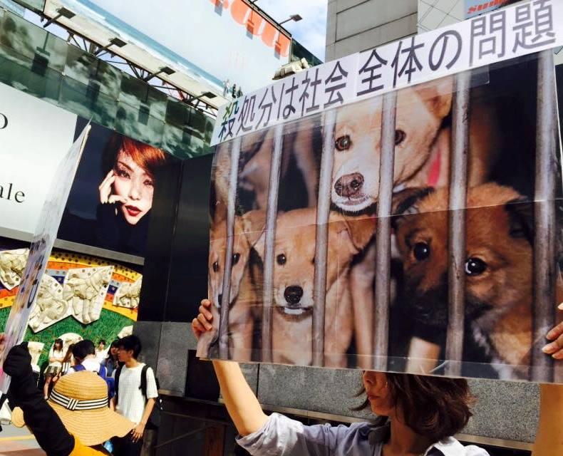 動物活動渋谷