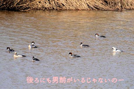 2015418miko4.jpg
