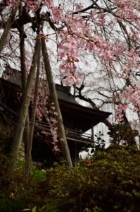 円正寺 山門