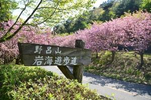 岩海遊歩道の看板と八重桜の桜並木