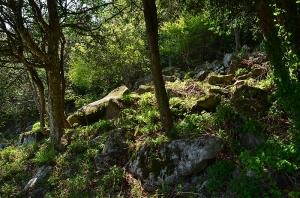 野呂山の岩海