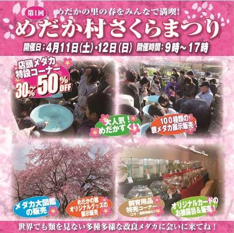 sakurabanakai_20150408173635a7a.jpg